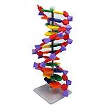 DNA모형세트(분해조립식)/12염기쌍
