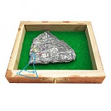 실물고사리화석/보급형고사리화석