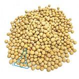 흰콩/노랑콩/1kg