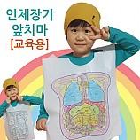 인체장기 앞치마/5인용
