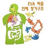 EVA 인체장기구조퍼즐/색상랜덤