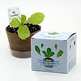 팜팜농장_상추 모종키우기/식물기르기