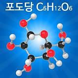 분자구조만들기/포도당/5인용