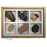 실물화석6종세트/초등화석6종세트