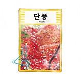 단풍나무 씨앗