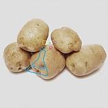 감자/5개입