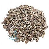 조개껍데기 E형/조개껍질/100g