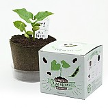 팜팜농장_강낭콩 모종키우기/식물기르기