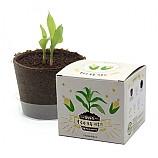 팜팜농장_옥수수 모종키우기/식물기르기