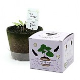 팜팜농장_가지 모종키우기/식물기르기