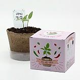 팜팜농장_고추 모종키우기/식물기르기